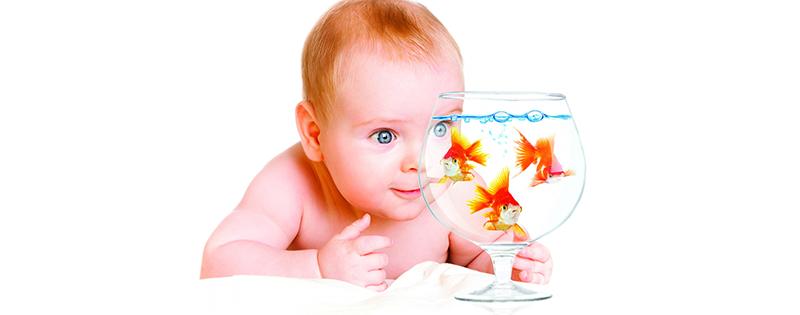 1680x1260_child-aquarium-fish